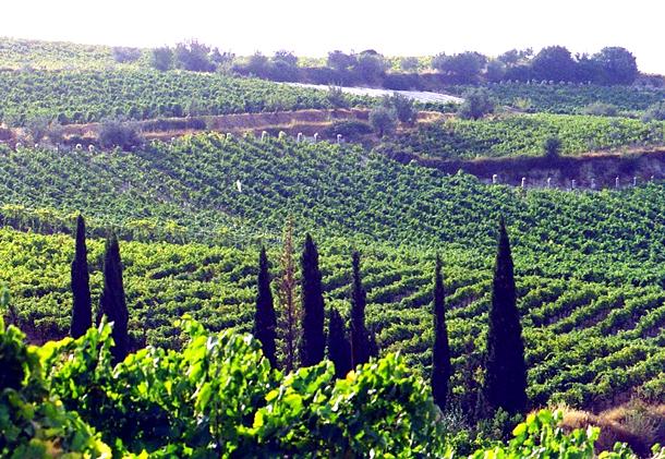 Grecia, viñedos en el norte